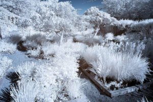 Knox Farms Infrared Photography